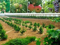 市农业局上线 聊特色产业话题