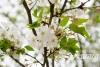与春天来一次约会 泸州电台樱花跑活动完美谢幕