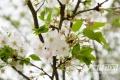 与春天来一次约会 泸州电台樱花跑活动