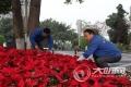 主城区50万盆鲜花装点 泸州全力备战国