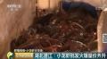 小龙虾价格又飙涨60%,市场破千亿级!