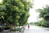 公共区域树木果实可以随意采摘? 影响景观遭投诉