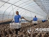 古蔺县:大寨发展食用菌 助农增收