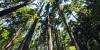 泸州市国有林场改革工作通过省级验收