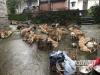 装了近百只狗!泸州黄舣收费站这辆货车被当场拦下