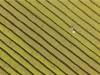 叙永:千亩茶山青翠欲滴 巨型五线谱秀丽壮观