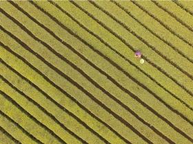 泸州:巨型五线谱秀