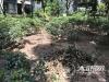泸州锦华十年城小区树木被砍 业主不满讨说法