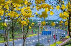 瀘州最美機場路 黃