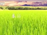 75秒航拍视频记录泸县最美春播