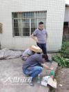 泸州:开展杂交水稻和玉米制种基地转基因监管检测