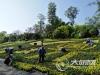 营造节日氛围 泸州约130万盆鲜花装点主城区
