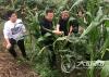 确保农业生产安全 省植保站督导泸州农作物病虫害监测防控