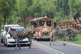 泸州蓝光·长岛国际社区野生动物园来了