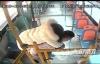女乘客身体不适 泸州公交车司机背其小跑紧急送医