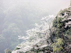 2019泸州冬天第一场