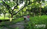 城东  让泸州生态DNA传承与宜居跃升