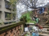 泸州:黄桷树长势较快成安全隐患 周边居民开始慌了