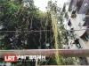 泸州城区行道树遭菟丝子缠绕   绿化部门将进行修剪