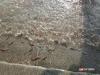 泸州在长江增殖放流3万多尾珍稀鱼类