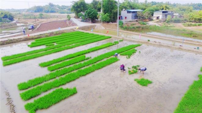 泸州:不负好时光 农户插秧忙